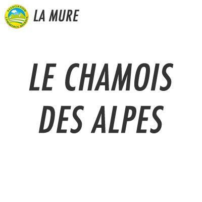 Le Chamois Des Alpes